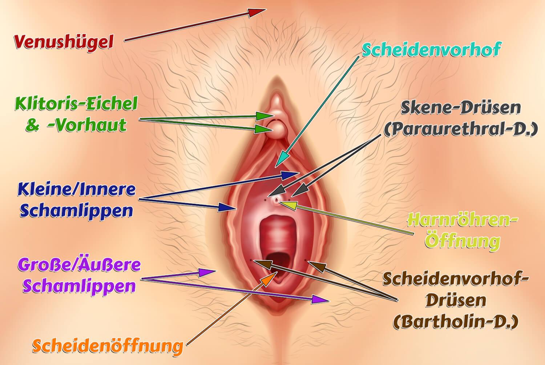 Vulva einer Frau